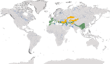 Verbreitung der Gattung Cettia