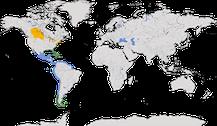 Verbreitung der Gattung Leucophaeus