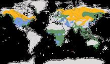 Verbreitung der Gattung der Seeadler
