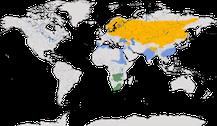 Verbreitung der Gattung Grus