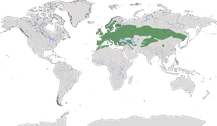 Verbreitung der Gattung Cyanistes