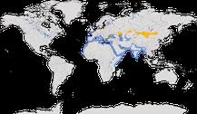 Verbreitung der Gattung Ichthyaetus