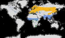 Verbreitung der Gattung der Wendehälse (Jynx)
