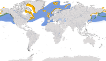 Verbreitung der Gattung der Lunde