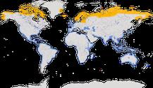 Verbreitung der Gattung Pluvialis