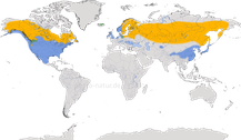 Karte zur Verbreitung der Gattung Bucephala