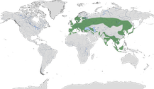 Verbreitung der Gattung Picus
