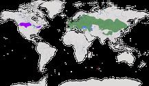 Karte zur Verbreitung der Gattung der Rebhühner (Perdix)