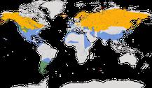Karte zur Verbreitung der Gattung der Pfeifenten