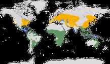 Karte zur Verbreitung der Gattung der Zwergdommeln
