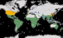 Karte zur Verbreitung der Gattung Bubulcus