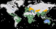 Karte zur Verbreitung der Gattung Tachybaptus