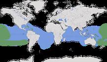 Karte zur weltweiten Verbreitung der Noddiseeschwalben.