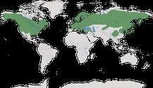 Verbreitung der Gattung Poecile