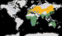 Verbreitung der Gattung der Milane (Milvus)