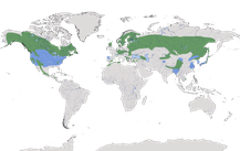 Verbreitung der Gattung der Kreuzschnäbel