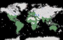 Karte zur Verbreitung der Gattung der Schleiereulen.