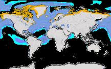 Karte zur weltweiten Verbreitung der Eiderenten.