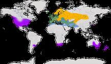 Verbreitung der Gattung Sturnus