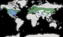 Verbreitung der Gattung der Eigentlichen Baumläufer