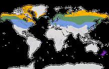 Karte zur Verbreitung der Gattung Birkenzeisig