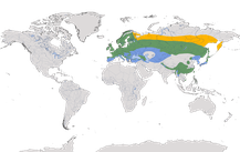 Karte zur Verbreitung der Gattung der Gimpel