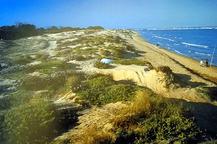 El cordon  de dunas separa la mar del pinar del litoral, en Alicante.