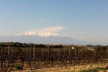 Sur le chemin de Ruscino
