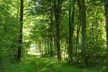 Les forêts, au bilan captage co2 favorable.