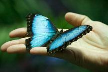 HSP coaching - spreid je vleugels