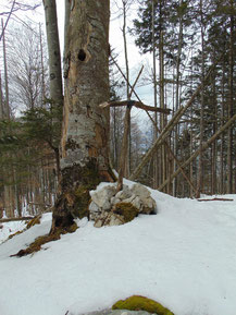 Falkenstein Gipfelkreuz