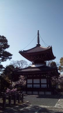 京都の隠れ桜の名所 裏千家の境内のようなお寺 京都観光タクシー 英語通訳ガイド 永田信明