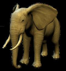 Artwork Elefant (Meine Zoo-Tierarztpraxis 3D)