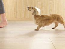 犬の足腰にやさしく、汚れに強いペット用床材