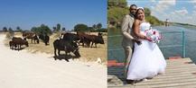 Über Kühe und Hochzeit in der nächsten Fazit