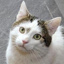 Herzblatt chat