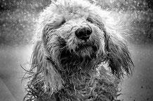 Le chien à la notion du bien et du mal