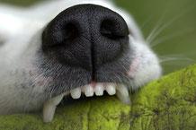 La morsure du chien