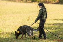 Suchen können die Hunde von Natur aus! Unsere Aufgabe ist es, das Verhalten so zu steuern, dass es für uns Menschen nutzbar wird!
