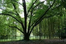 arboretumdelamartiniere_PetiteFabrique_Montbazon