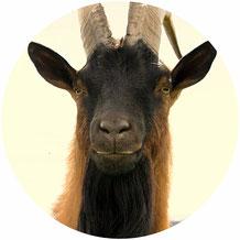 Geissenhof tierleidfreie Landwirtschaft in