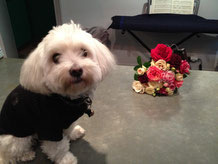 ムッシュの可愛い愛犬