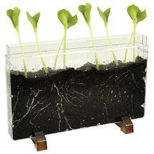 Boite aérée : Grâce à cette boîte aérée, vous allez pouvoir suivre l'évolution de la vie sous terre. Il suffit de remplir de terre et de graines (haricots...), ajouter du compost et tout prendra vie! Contenu : boîte en plastique à acheter pas cher!
