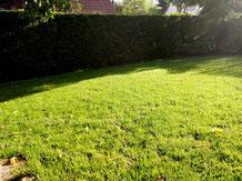 Rasen Grundstückspflege