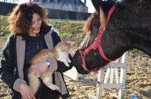 Equitation & ferme découverte  Vendée