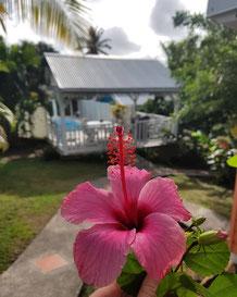 bungalow chalet villa vacances 97290