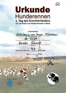 Cataleyas Urkunde für das Hunderennen: 4,4 Sekunden für ungefähr 50 Meter.