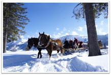 Ferienappartement Kessl, Allgäu, Oberstaufen Steibis, Pferdeschlittenfahrt