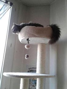 chat qui prend de la hauteur