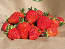 Lecker: hiesige Erdbeeren